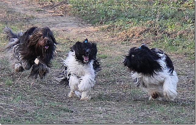Moritz, Amara und Willma