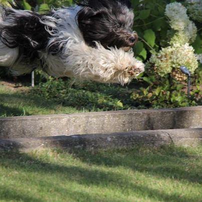 Foto des Monats August 2012: Unsere kleine fliegende Holländerin