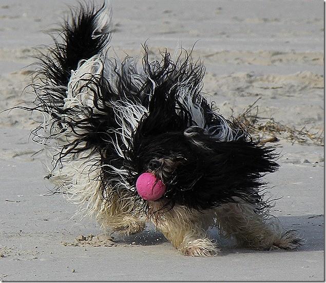 Ich, das Fellmonster mit meinem Lieblingsball