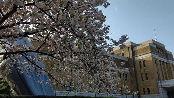 【新24期】通勤途中で撮った上野公園のスナップ