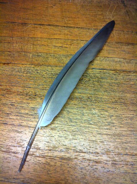 こちらは、形から翼の先端付近の羽だと思います。 カッコいい♪