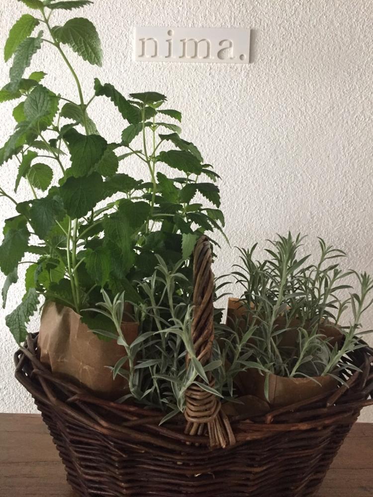 またまたバスケットにinされた植物をいただいた♪  すげ〜いい感じ!  Kさんいつも本当にありがとうございます。