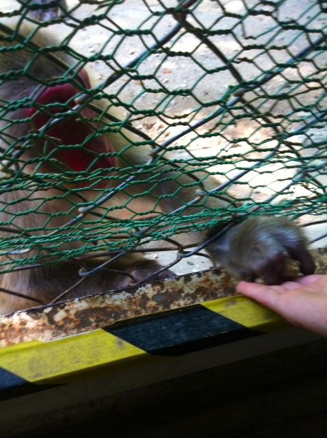 その後、近くのモンキーセンターに猿を見に行く、、、、昼食を皆でとり解散となりました。