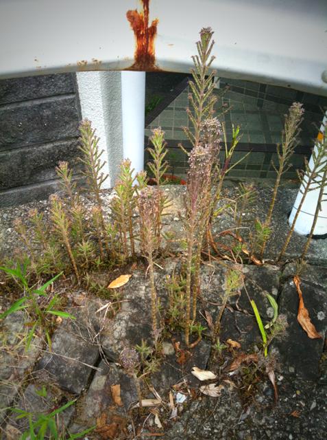 気に入った植物が自生してくれる、、、理想ですね、。 うちもそうなんね~かな?w