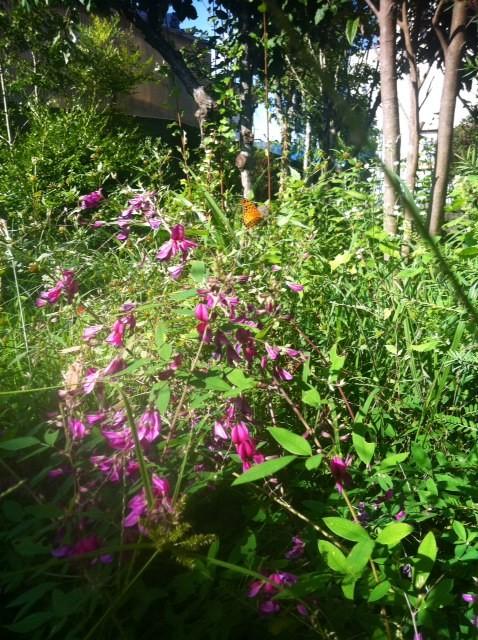 休みの度にこんな事に時間使ってられないでしょ~w なのでナチュラル系にすべくプロにお願いした。 土の入れ替えし、芝張って、いい感じの植物を植えてもらいます♪ 3回くらい打ち合わせして好みに寄せてきたんで楽しみ~♪