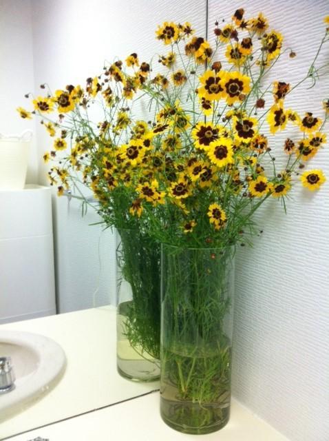 コレは洗面台に置かれてる今週の花ですけどコレは70円♪ もうお花屋さんには行けませんwww 来週の花はなんだろう?♪