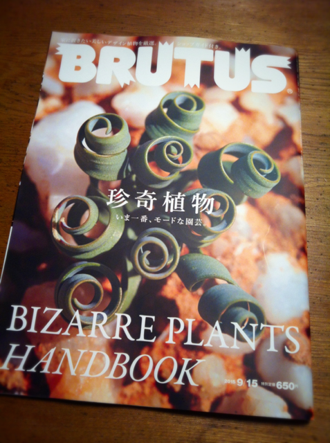 出たばっかのブルータス、、超いい感じなんだけど、もうお腹いっぱい!w 最近珍しい系植物をクローズアップし過ぎで若干冷めちゃって(汗) 今はホームセンターの植物あたりが気分ですね。。。 でも本などで、珍しい植物を見たりするのは今でも好きですね~♡ この本は買いだとおもいますよ!w