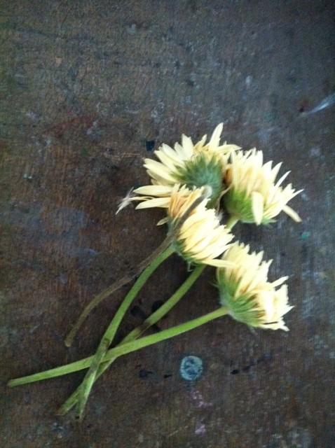 オープンのときに頂いたお花をドライフラワーにと、、、取りあえず何でもかんでも縛って吊るしてました、、、、結果、向き不向きがあるんやねw