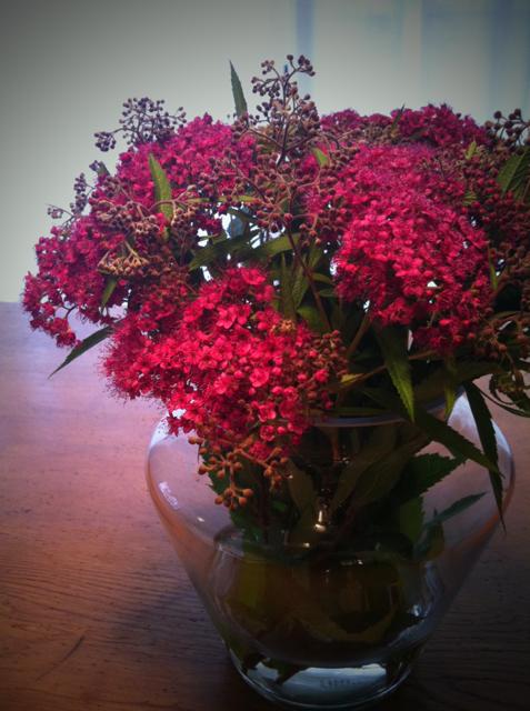 うちの奥さん、よく切り花を買ってきます、、、、、「で?」って感じでしょうが、別になにも無いしオチもありません。 あえて言えば、発色がよく初めて見る花ですけど、なんて名前だろう?