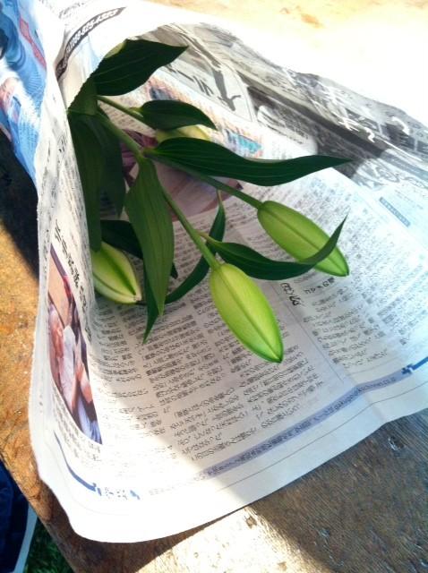 日曜に頂いたモノなのに出し忘れてて、、(汗) で昨日ブログ書いた後、花見て、「あ、咲いたな~、、、あ!コレももらったんや!」てことでして、。(滝汗)