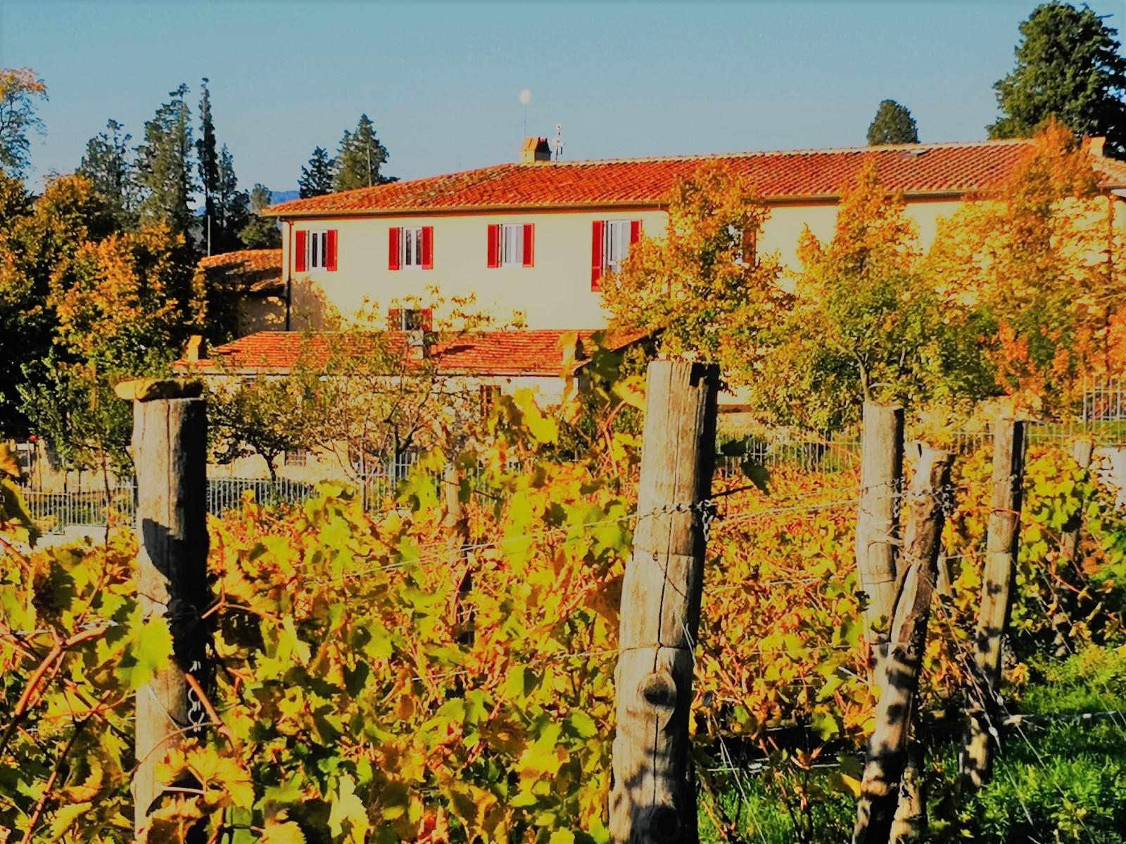 Tour durch die Weingärten