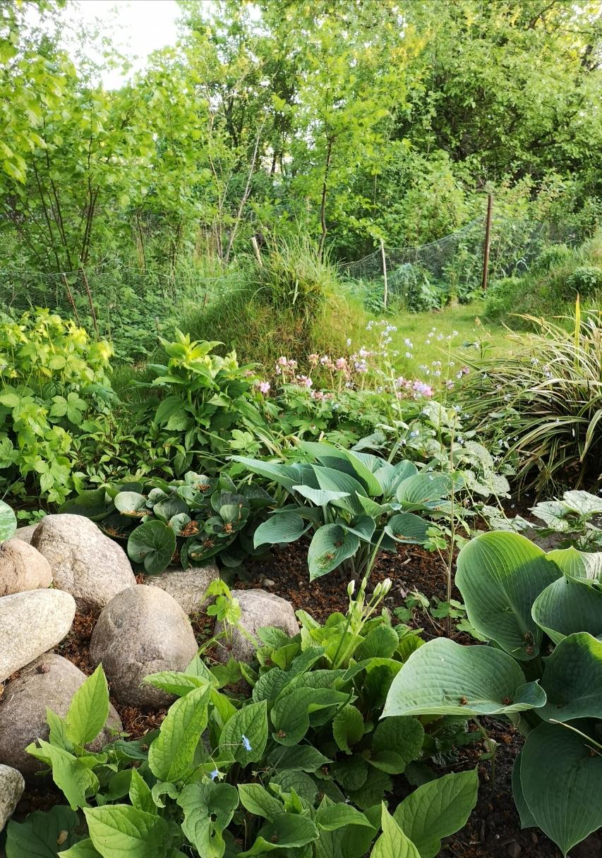 Das Positive sehen: die geliehene grüne Kulisse vom Nachbarn. Und das  Negative wie  den drahtigen Zaun lieber vergessen...