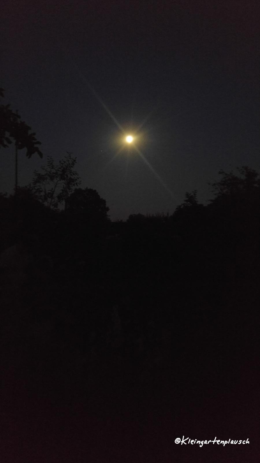 Wir starten mit einem Blick auf Nachbars Pergola und den immer volleren Mond, der hier eher wie ein kleineres Licht am Nachthimmel  leuchtet...