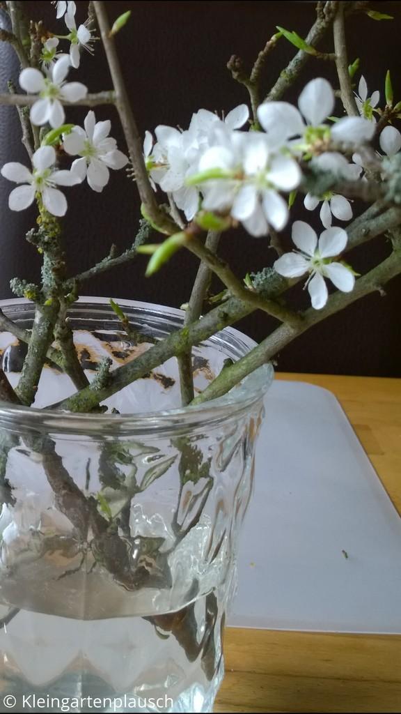 Blühende Zweige der Kirschpflaume in einer Glasvase auf einem hellen Kiefernholztisch