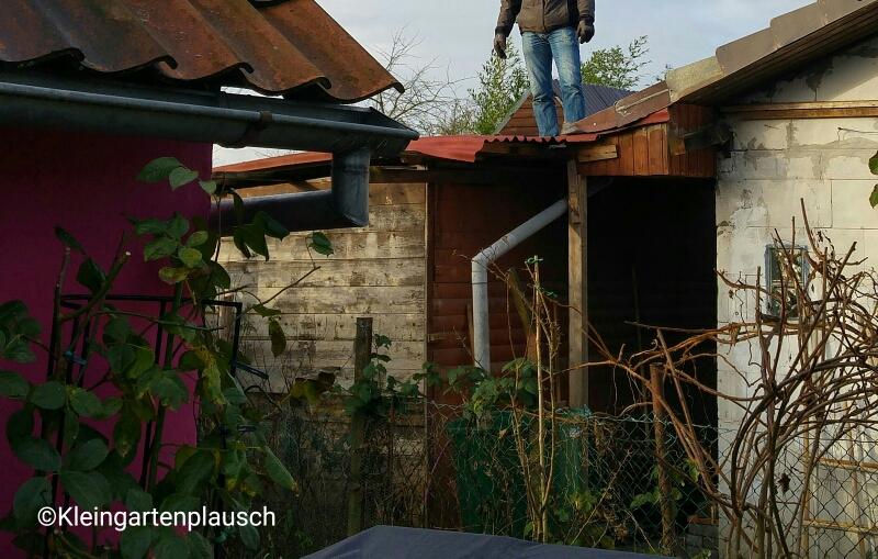 Dies ist nicht der Dachdecker, sondern Lieblingsgärtner beim Abriss des Schuppens ...