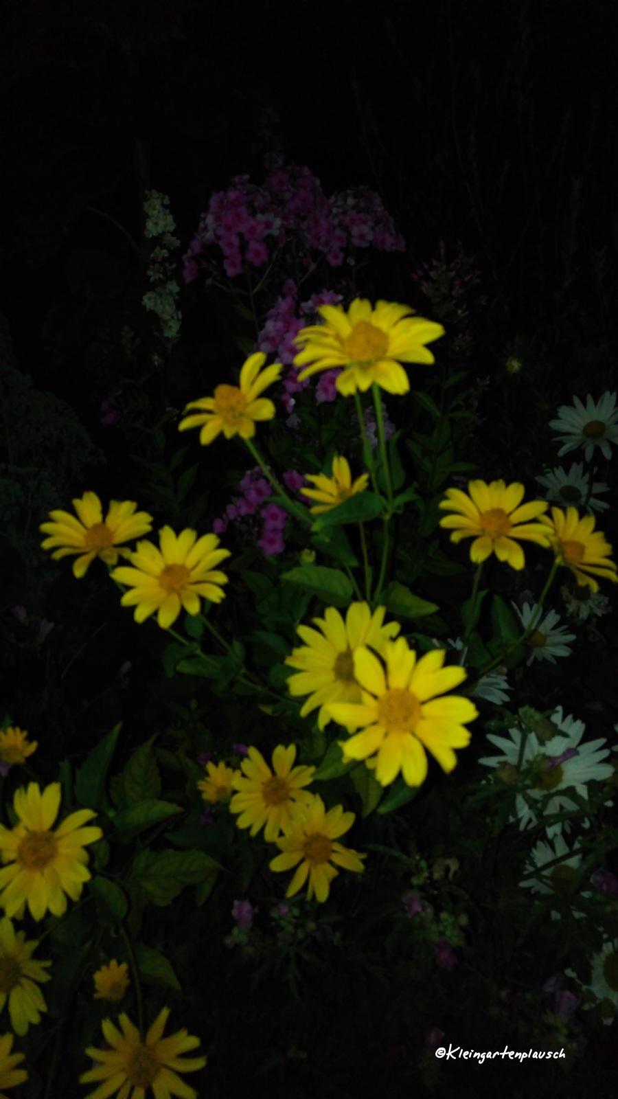 Die Pflanzen im Projektgarten ...