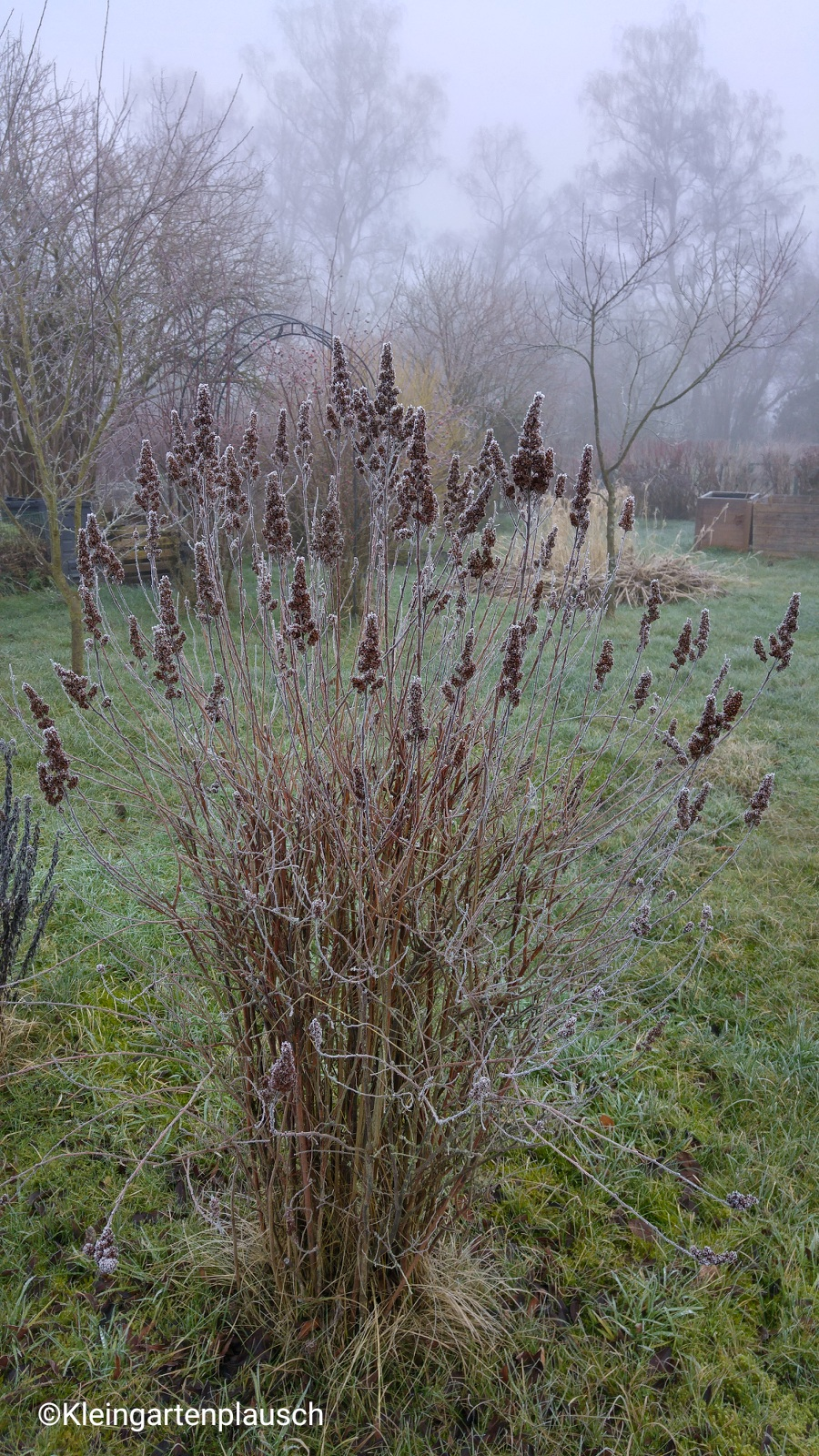 Wer die Staude bzw. das Gras erkennt, schreibe mir bitte den Namen - ich brauche die Pflanze dringend für den Winteraspekt im Kleinen Garten 😃!