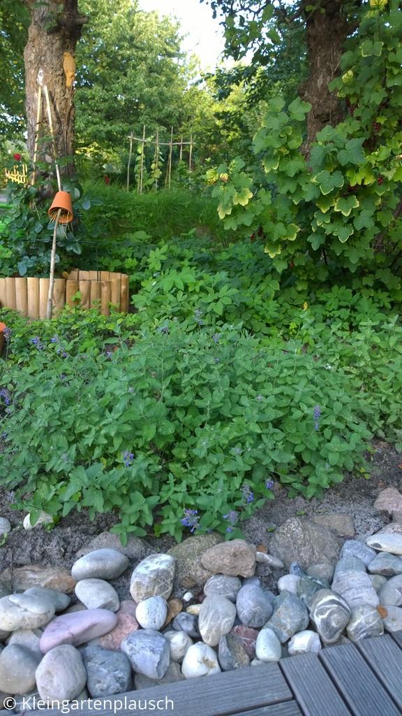Im Vordergrund Holzterrasse, dann große Kiesel, Katzenminze, Rose unter Apfelbaum, Ohrenkneifertontöpfchen