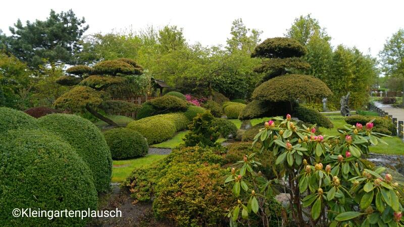 Zen-Garten mit tollen Formschnittgehölzen...