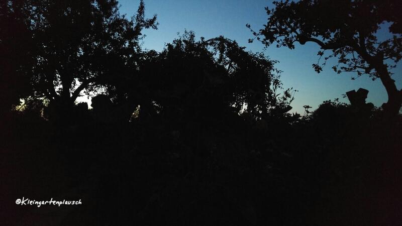 Nächtliches Garten-...