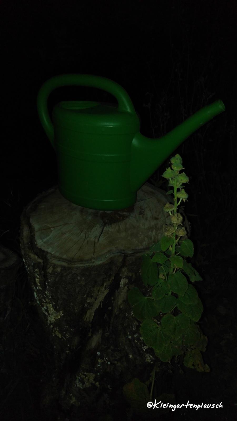 Eine von zwei Gießkannen - die wichtigsten Arbeitsgeräte im Projektgarten...