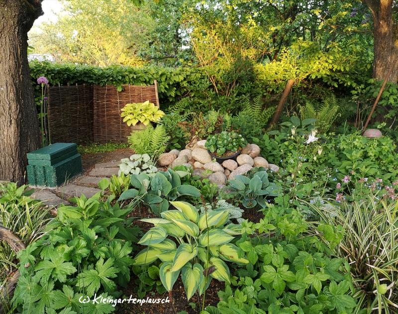 Mein Schattenbeet unterm Kirschbaum hat ein improvisiertes Bänkchen bekommen. Nach dem Regen kann man dort die Pflanzen beim Wachsen beobachten.