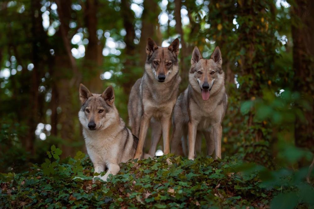Von links Beyzanur z Molu Es, Crying Wolf Jayarani und Anori und jede von ihnen in ihrem Wesen hervorragend eingefangen