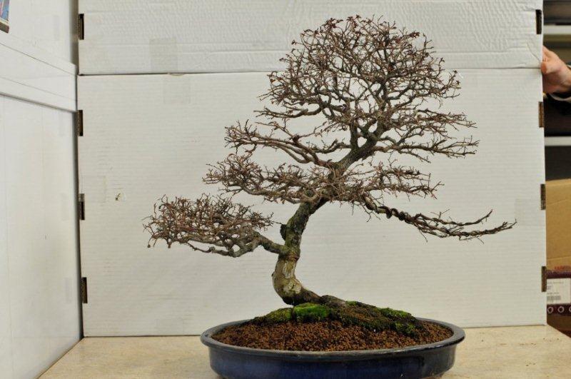 Chi fosse interessato può vedere nella galleria del 19 settembre 2010  com'era la pianta e via via nei vari step.