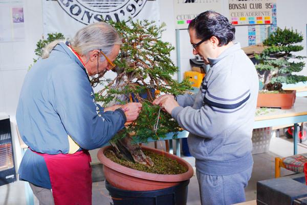 per la serie i bonsai non sono necessariamente piccoli...
