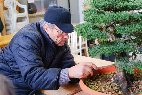 Lavorare un bonsai significa anche saper gestire il legno secco...