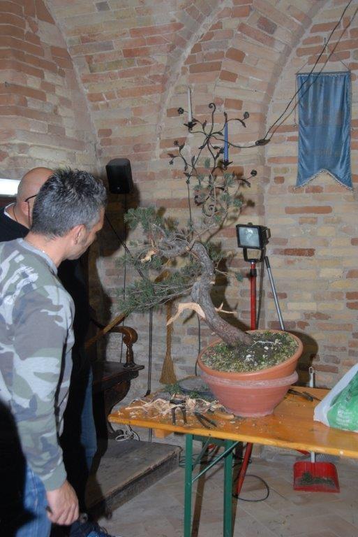 Ecco alcuni colleghi bonsaisti che cominciano a trasformare una pianta in vaso in Bonsai