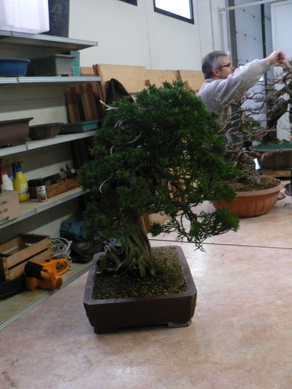 Anche questa pianta va ad arricchire la collezzione di Guido Mecozzi...