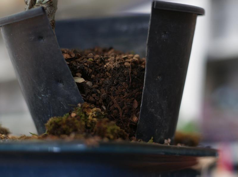 """Apriamo il vaso e decidiamo se separare la margotta dalle sue """"radici"""""""