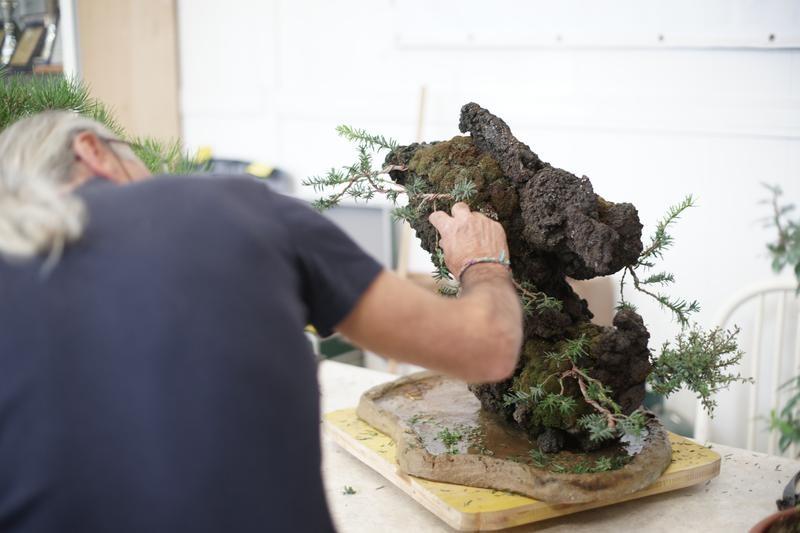 Il Sensei al lavoro su di un Ishizuki di TAXUS Baccata