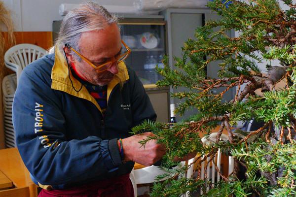 Ecco il nostro maestro Aldo Cetorelli completamente assorbito dalla pianta che lavora.