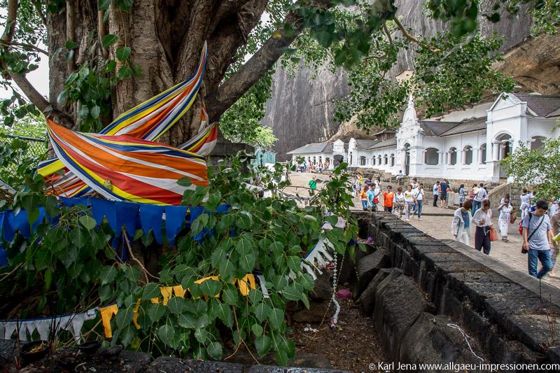 Bodhibaum mit weißen Höhlenvorbauten