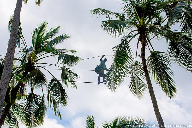 Palmsafternte zur Herstellung von Arrack