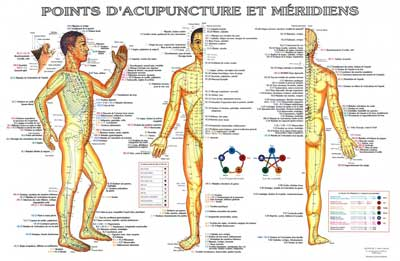 Méridiens et points d' acupuncture Lyon