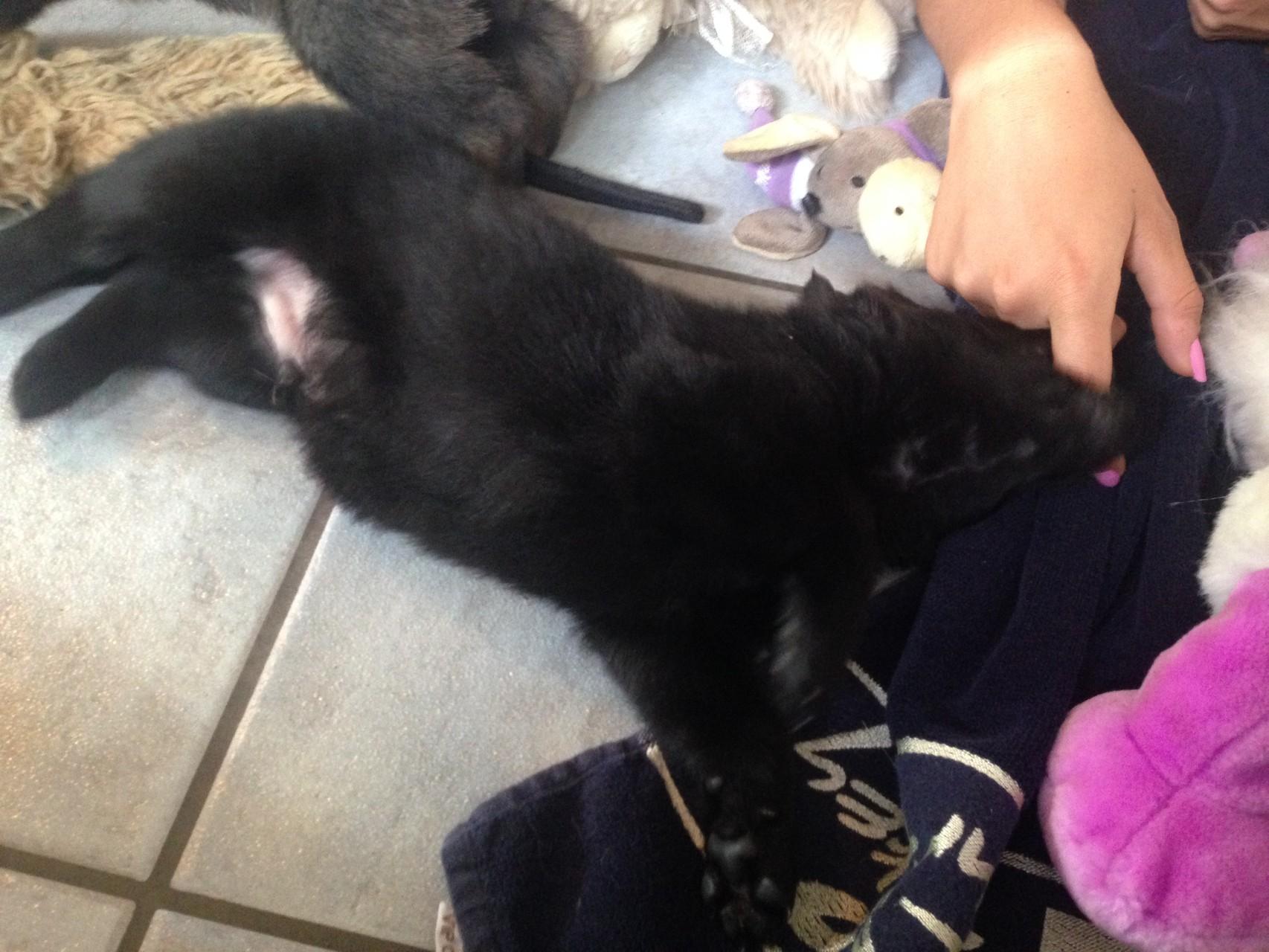 T-Wurf 4 Wochen alt
