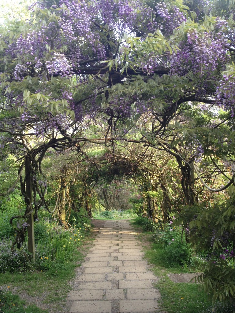 Wisteria archway, Marwood Hill Gardens, Spring '12