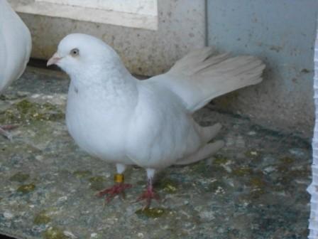 Ausstellungs-OR-Vogel