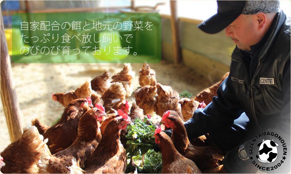 自然卵農園とは