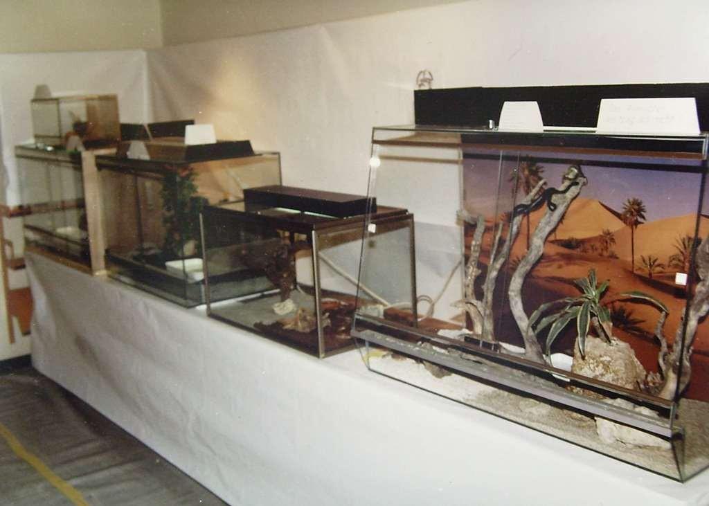 1. Ausstellung 1989 Trimbach