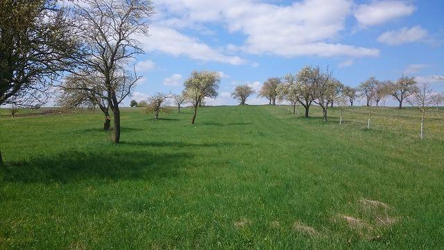 Unsere Streuobstwiese hatte zwar sehr alte und damit ökologisch wertvolle Bäume, ...