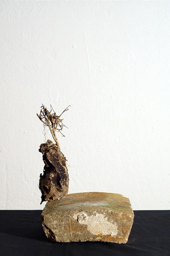 l'agave sullo scoglio