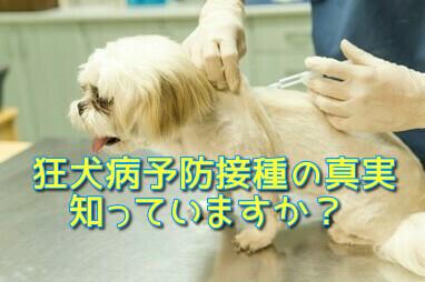狂犬病予防接種の真実【愛犬の健康と長寿のために3】