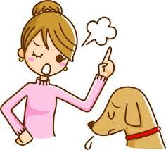 犬のしつけと主従関係の誤解