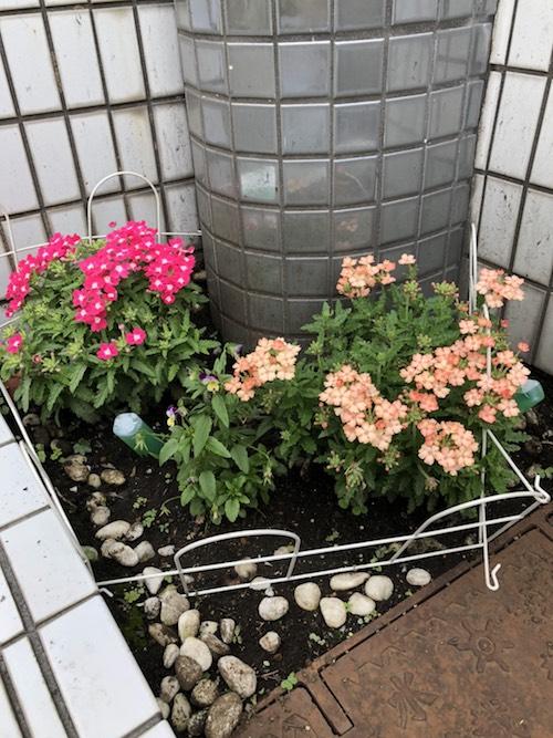 休業中もスタッフが手入れをしており、キレイなお花を咲かせています!