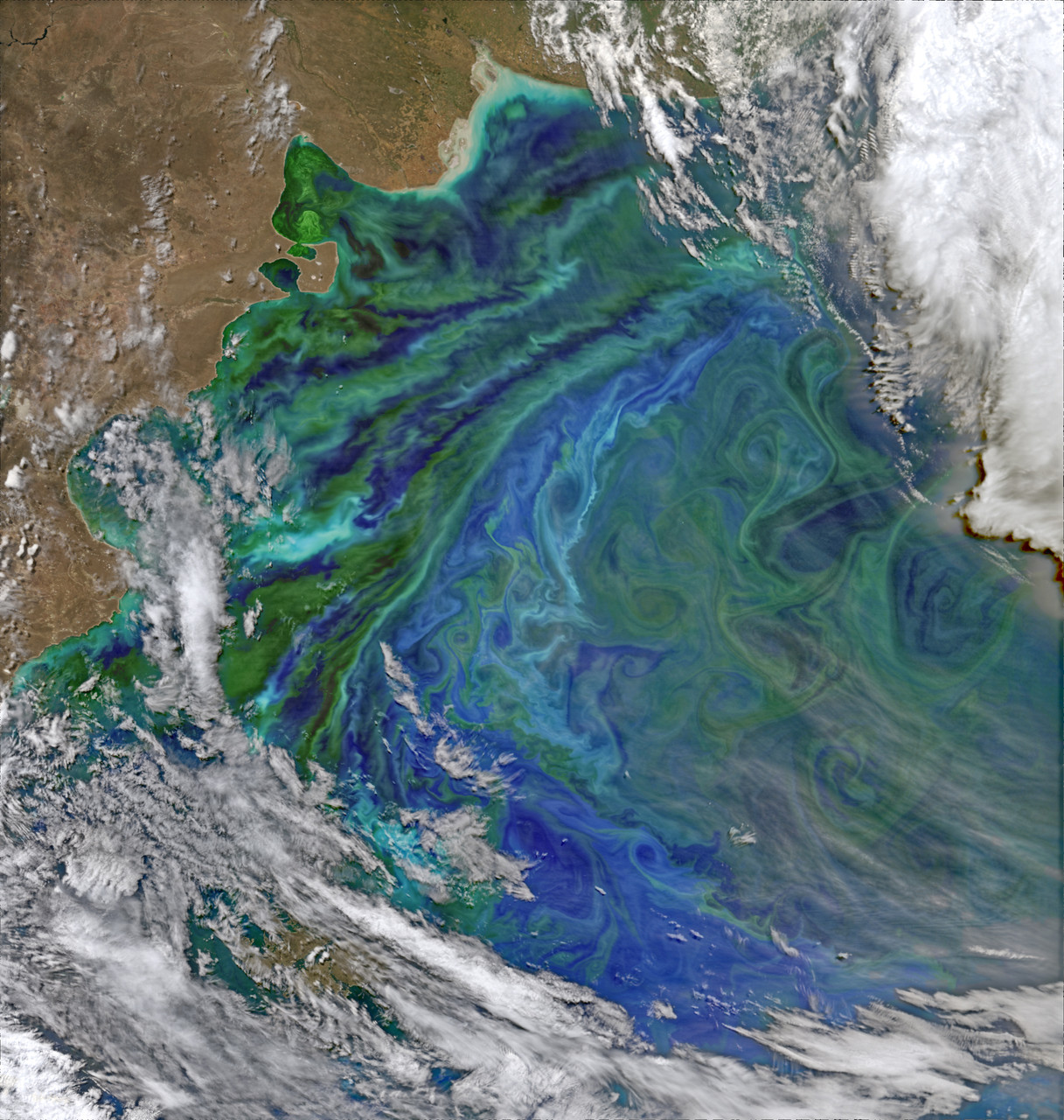 The Visible Infrared Imaging Radiometer Suite (VIIRS) on Suomi NPP captured this false-color view of phytoplankton-rich waters off of Argentina on December 2, 2014 - NASA gallery