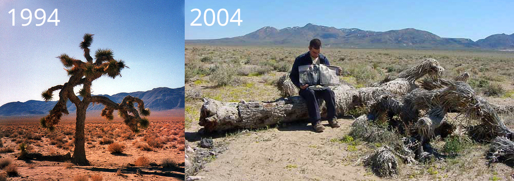 Der Joshua Tree 1994 und abgestorben 2004 mit einem Fan, der das Cover präsentiert. Heute ist fast nichts mehr von dem Baum übrig. (Fotos: gemeinfrei)